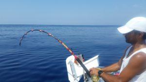 Tonno rosso pescato a drifting con l'esca viva