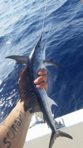Piccolo rostrato pescato a drifting a tonni